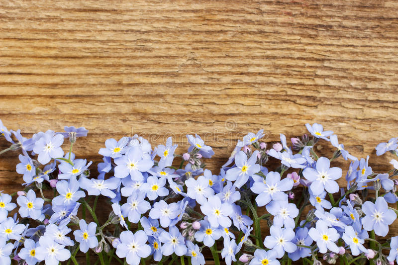 Forget-me-not flowers on wooden background stock photo