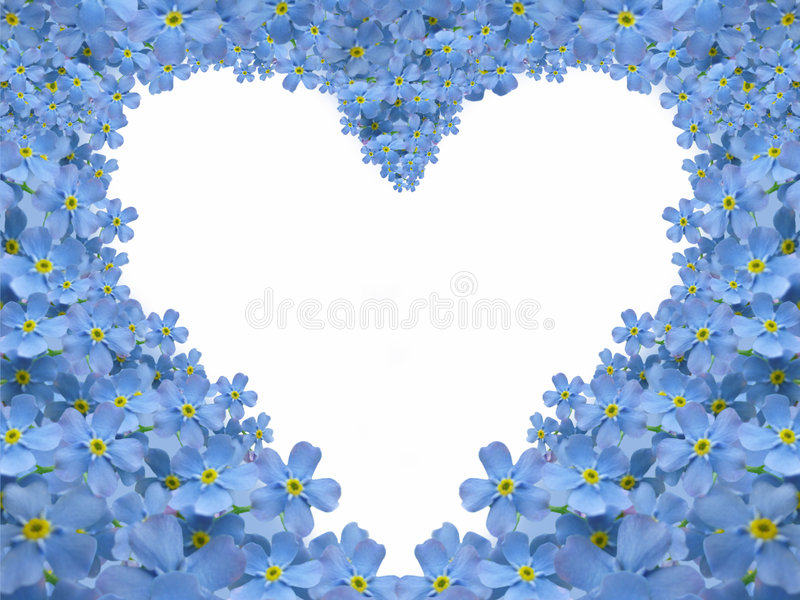 Forget me not heart vector illustration