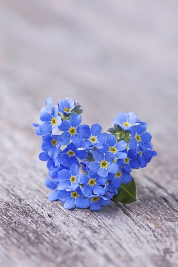 Forgetmenot-Blumen stockfotografie