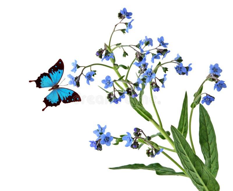 Forgetmenot i Motyl obrazy stock