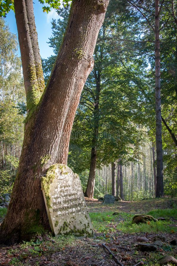 Forgotten tombstone standing alone in a forest royalty free stock photography