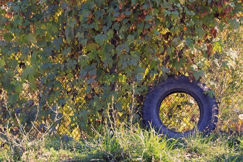 Forgotten wheel royalty free stock photo