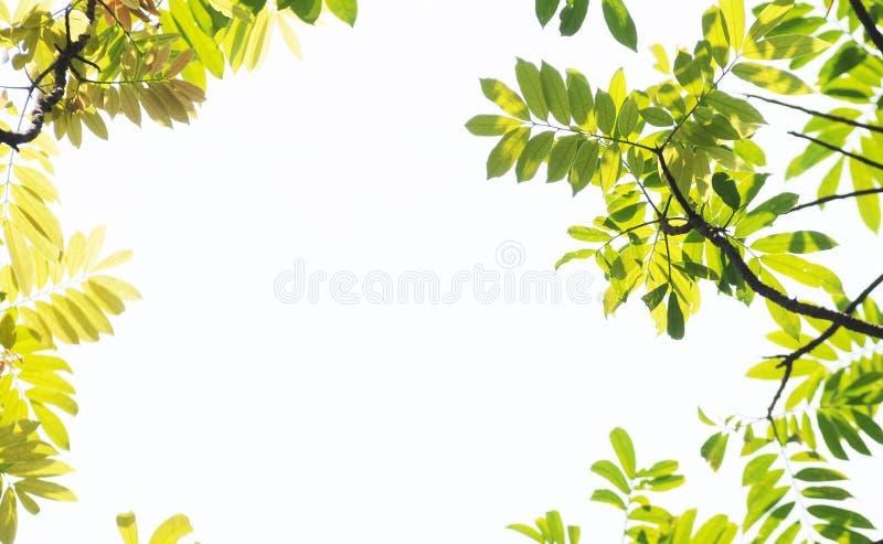 forground låter vara treen arkivfoton