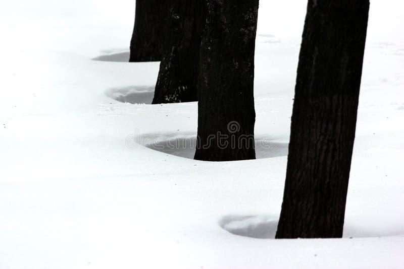Fori in neve soffiata dal vento e dalla bufera di neve fotografia stock