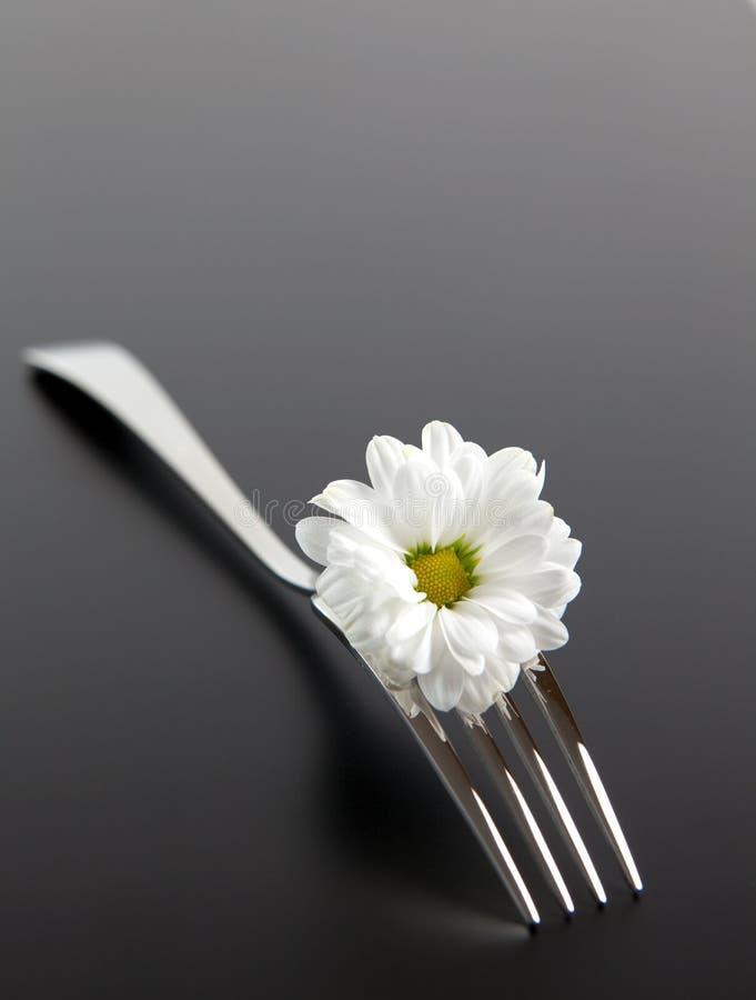 Fork with daisy stock photos