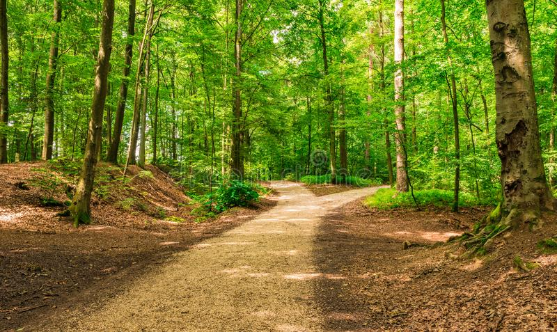 Forked roads in green forest royalty free stock images