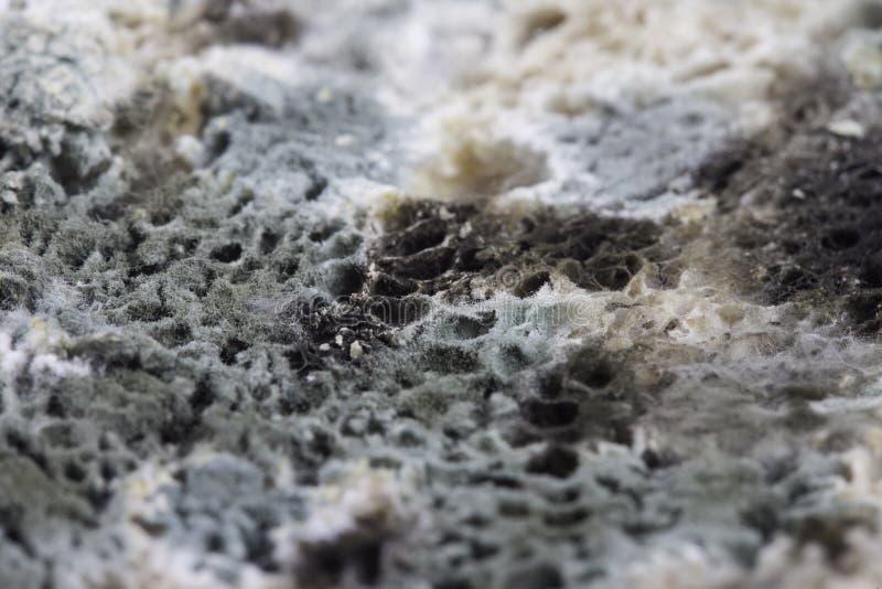 Form på brödcloseupen arkivfoto