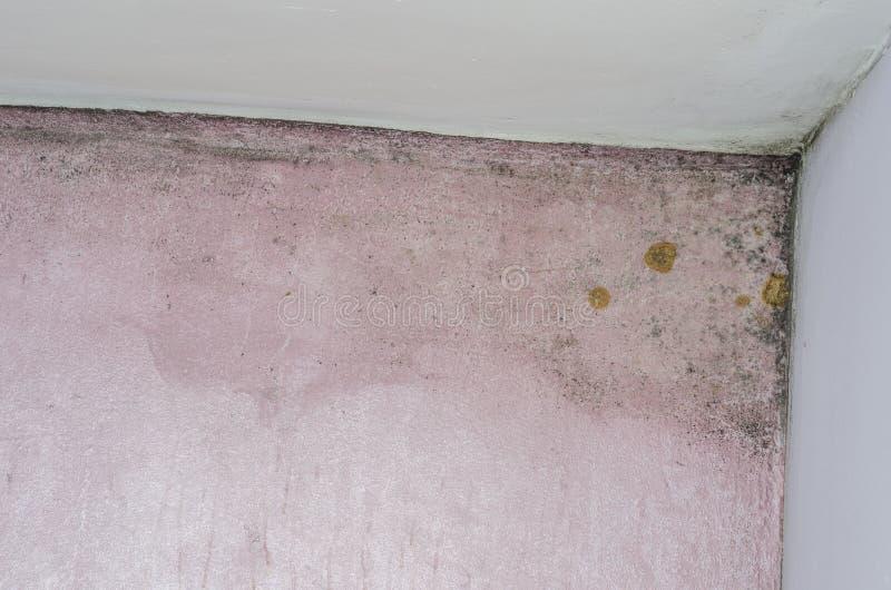 Form- und Feuchtigkeitsanhäufung auf rosa Wand stockbild