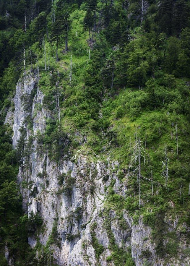 Formação de Rocky Mountain na floresta densa foto de stock royalty free
