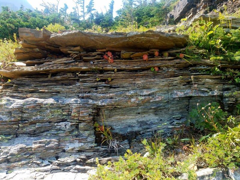 formação geological do córrego de 4k Rocky Mountain com as flores no verão imagem de stock