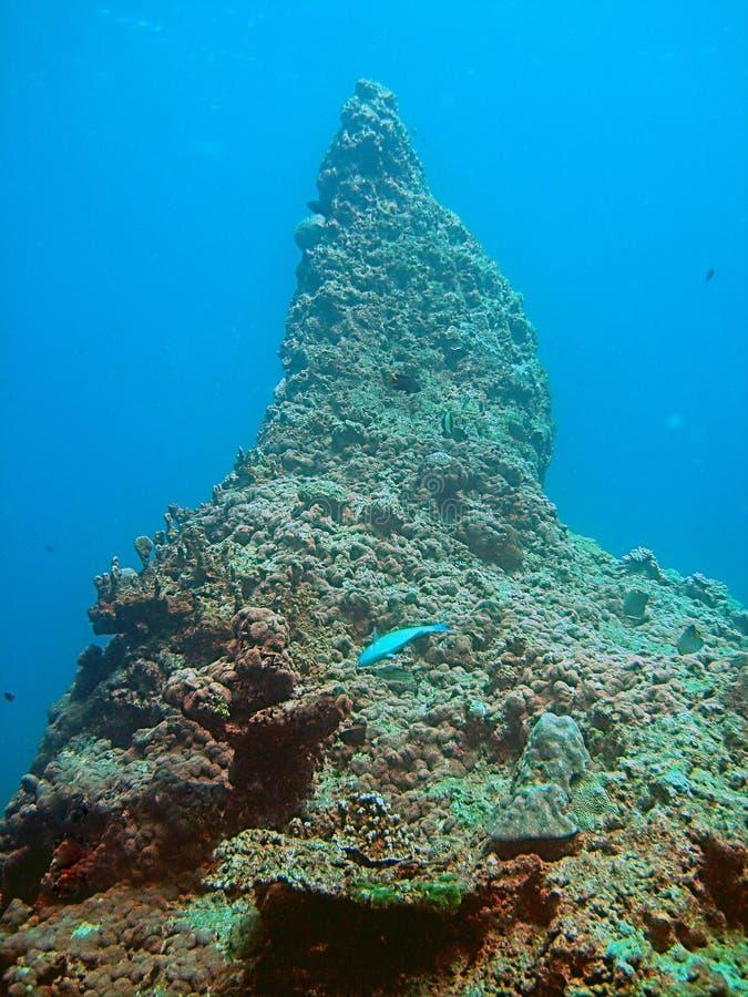Formação original do recife coral fotografia de stock