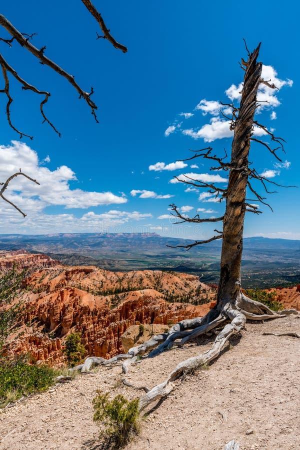 Formações de rocha coloridas em Bryce Canyon National Park, U do azarento imagem de stock