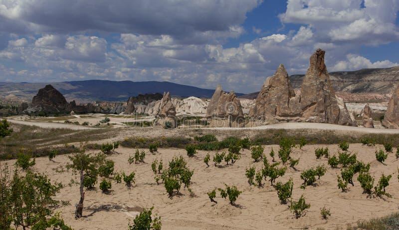 Formações de rocha e wineyard no vale branco, Cappadocia imagem de stock