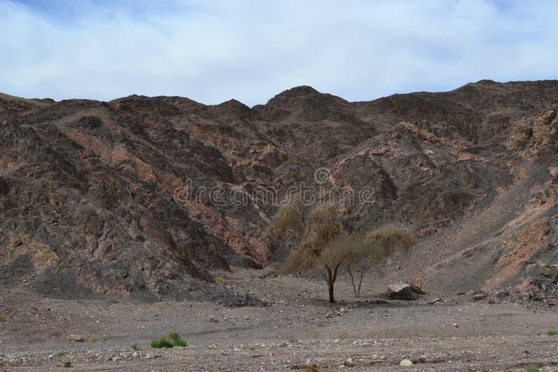 Formações de rocha interessantes no parque de Timna, deserto do Negev, região selvagem em Israel sul, Eilat imagem de stock