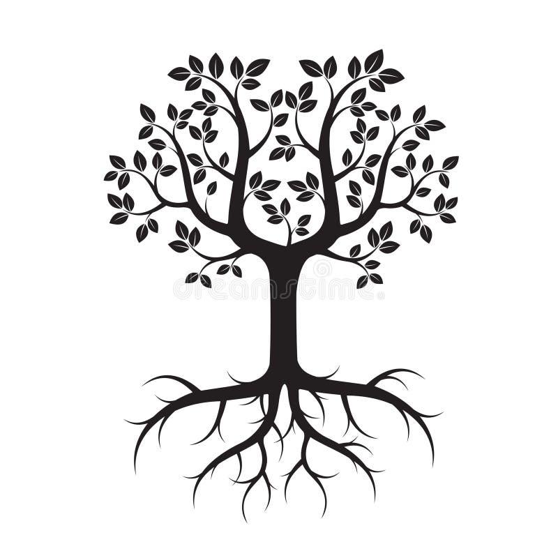 Forma da árvore com folhas e raizes Ilustração do vetor ilustração do vetor