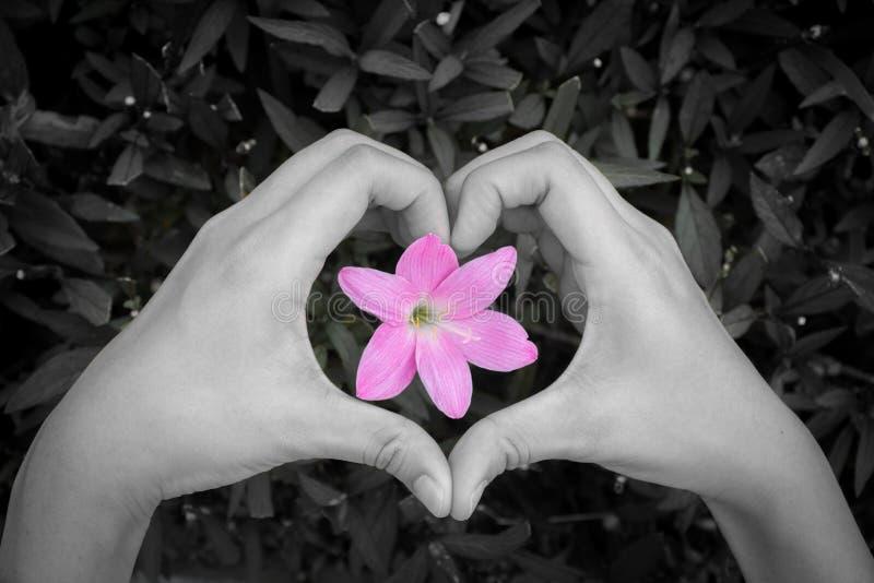 Forma de fabricación femenina del corazón del amor por las manos alrededor de la flor imagen de archivo