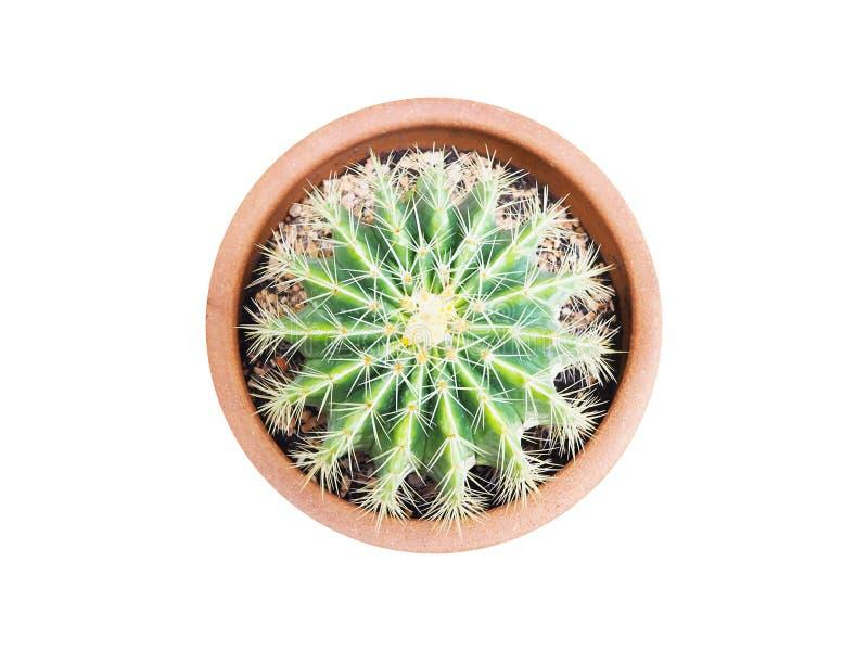 Forma de la corona del cactus en la maceta marrón aislada en el fondo blanco fotografía de archivo libre de regalías