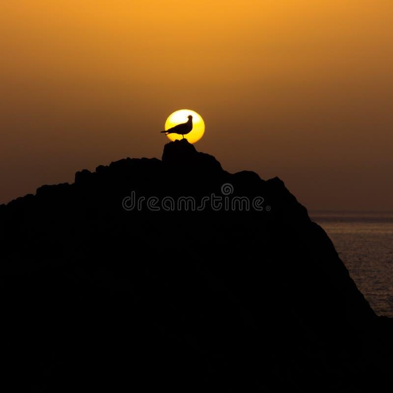 Forma de uma gaivota na frente do sol fotos de stock