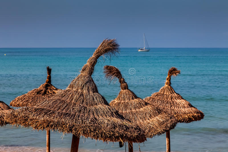 Download Forma de vida de la playa foto de archivo. Imagen de azul - 44850840