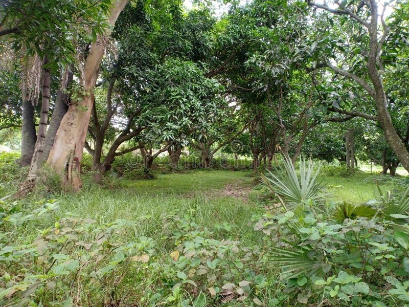 Forma de vida india y bosque en el vilage imagenes de archivo