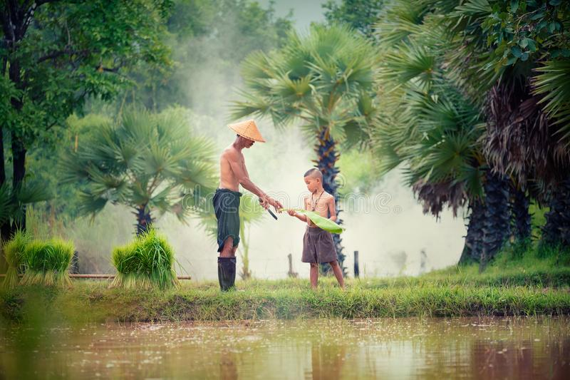 Forma de vida de la gente asiática suroriental en el campo Tha del campo foto de archivo