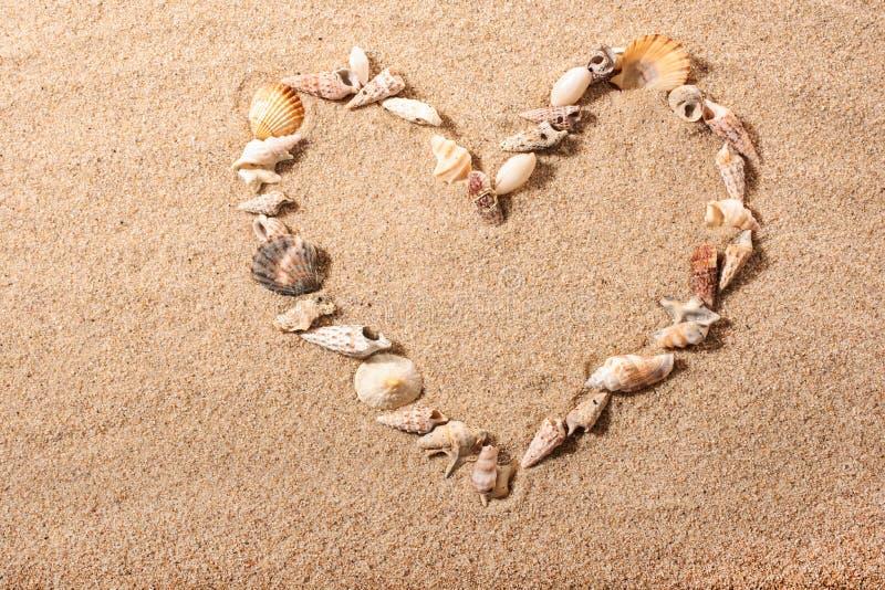 Forma del corazón de la cáscara del mar foto de archivo libre de regalías