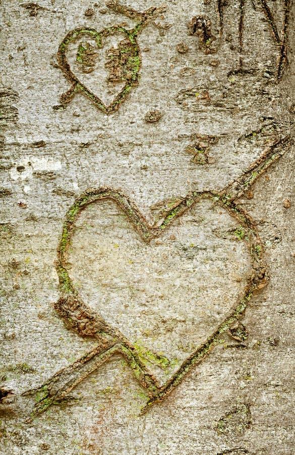 Forma del corazón en árbol de corteza foto de archivo libre de regalías