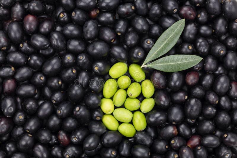 Forma dell'oliva verde sul fondo dell'oliva nera Oli raccolto fresco immagini stock libere da diritti