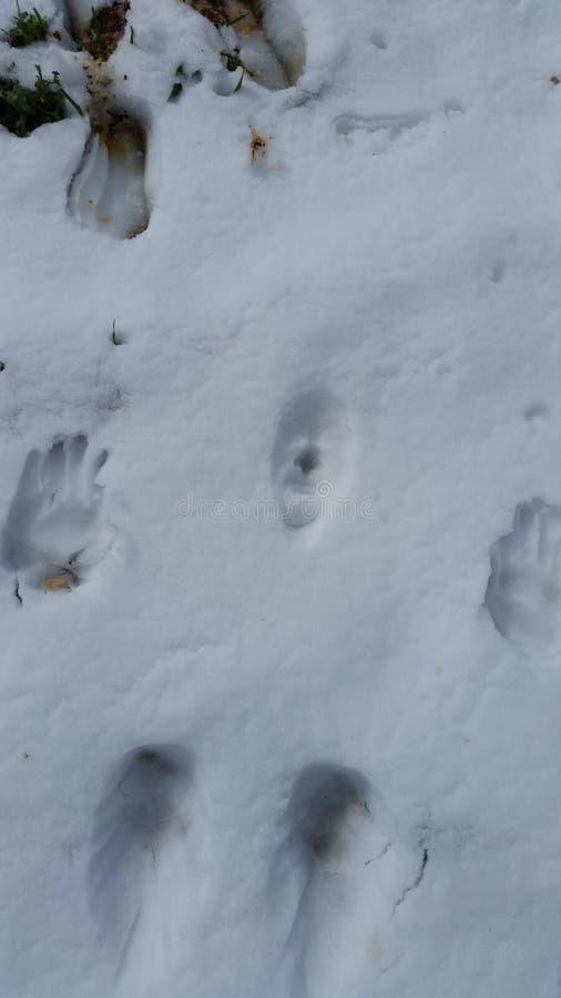 Forma della neve immagini stock libere da diritti