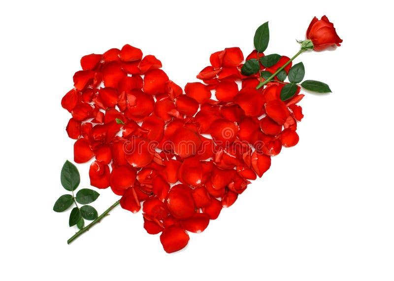 Forma do coração de Rosa fotos de stock