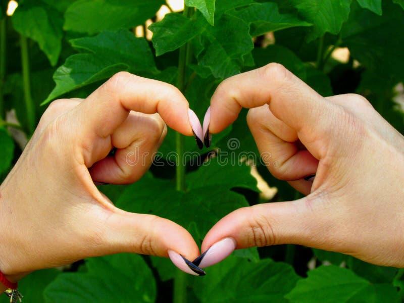 Forma do coração em um fundo verde frondoso foto de stock