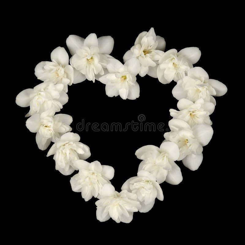 Forma do coração feita de Jasmine Flowers branco no fundo preto imagem de stock