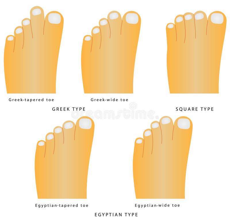 Forma do dedo do pé ilustração stock