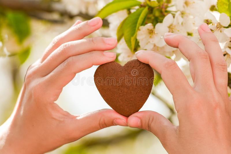 Forma fêmea do coração das mãos no alargamento da luz do sol do bokeh do verde da natureza e no fundo do sumário da folha do borr fotografia de stock