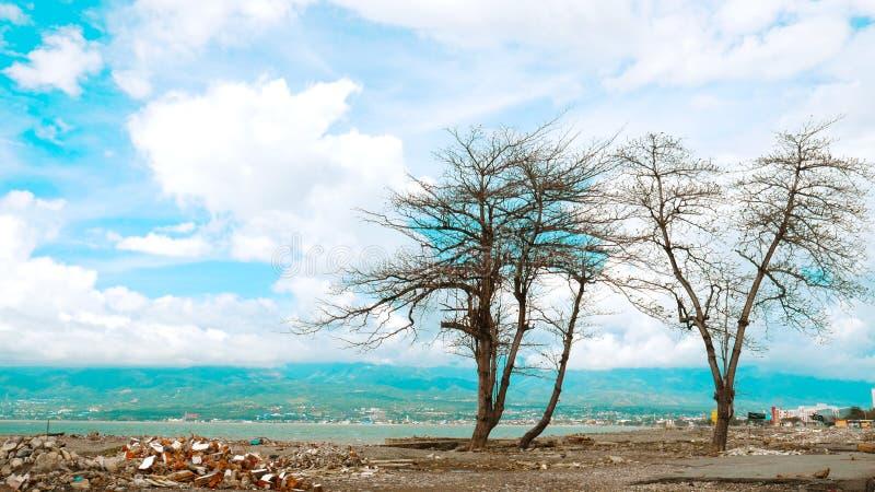 Formación artística de árboles foto de archivo libre de regalías