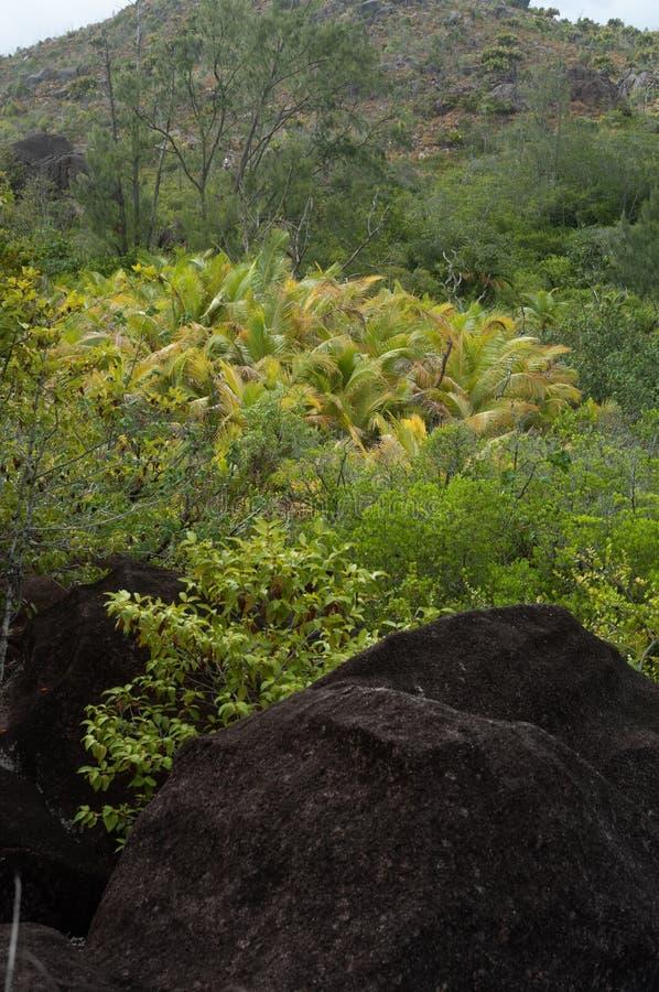 Formación de piedra de la lava en el arbusto en el parque natural de isla del curieuse, Seychelles imagen de archivo libre de regalías
