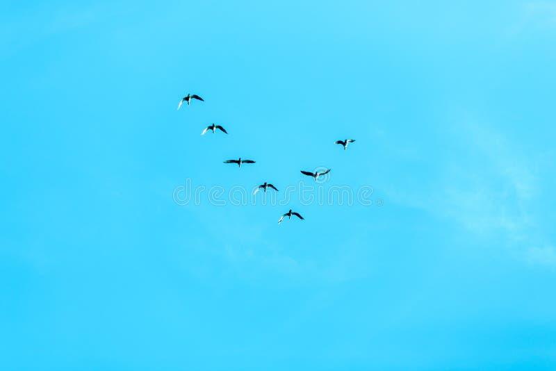 Formación v de pájaros fotografía de archivo