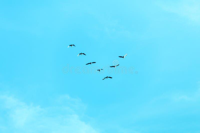 Formación v de pájaros imagenes de archivo