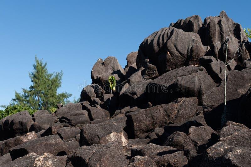 Formaci?n de piedra de la lava en el arbusto en el parque natural de isla del curieuse, Seychelles imagen de archivo libre de regalías