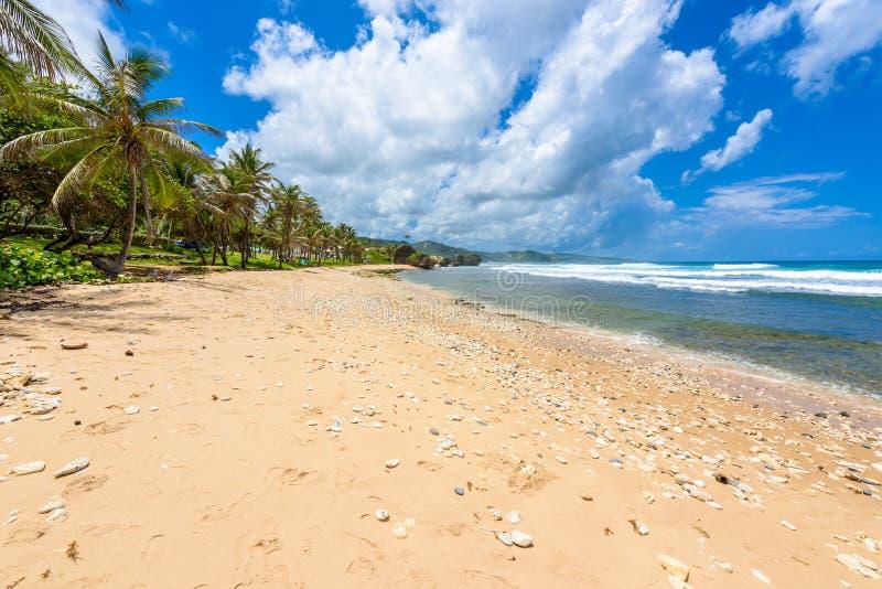 Formaci?n de roca en la playa de Bathsheba, costa este de la isla Barbados, islas caribe?as - destino del viaje para las vacacion imagen de archivo libre de regalías