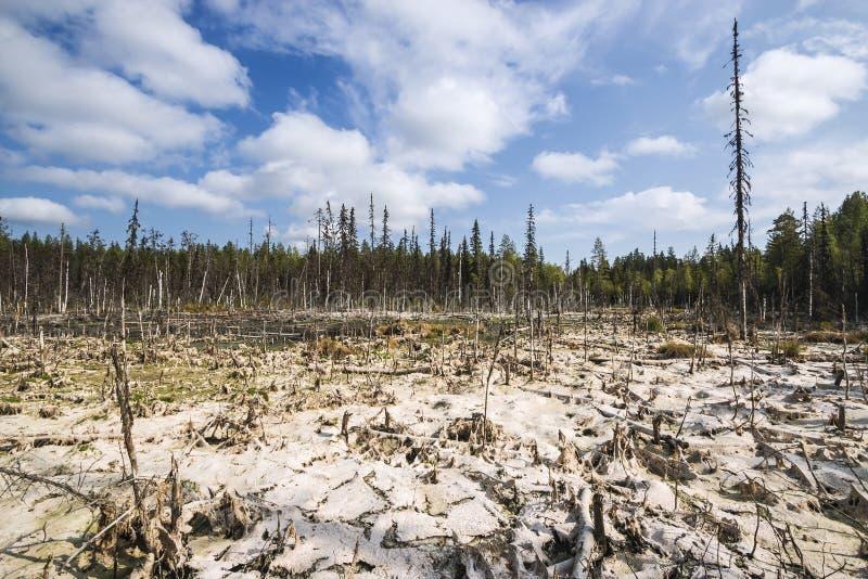 Formacja bagna mesotrophic W klimatycznej strefy tajdze, tundra Arkhangelsk region fotografia stock
