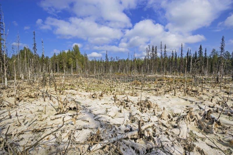 Formacja bagna mesotrophic W klimatycznej strefy tajdze, tundra Arkhangelsk region fotografia royalty free