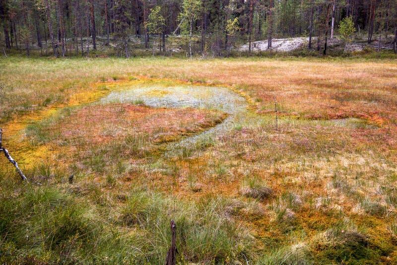 Formacja bagna oligotroficzni W klimatycznej strefy tajdze, tundra Arkhangelsk region zdjęcie stock
