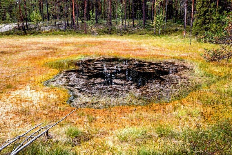 Formacja bagna oligotroficzni W klimatycznej strefy tajdze, tundra Arkhangelsk region zdjęcia stock
