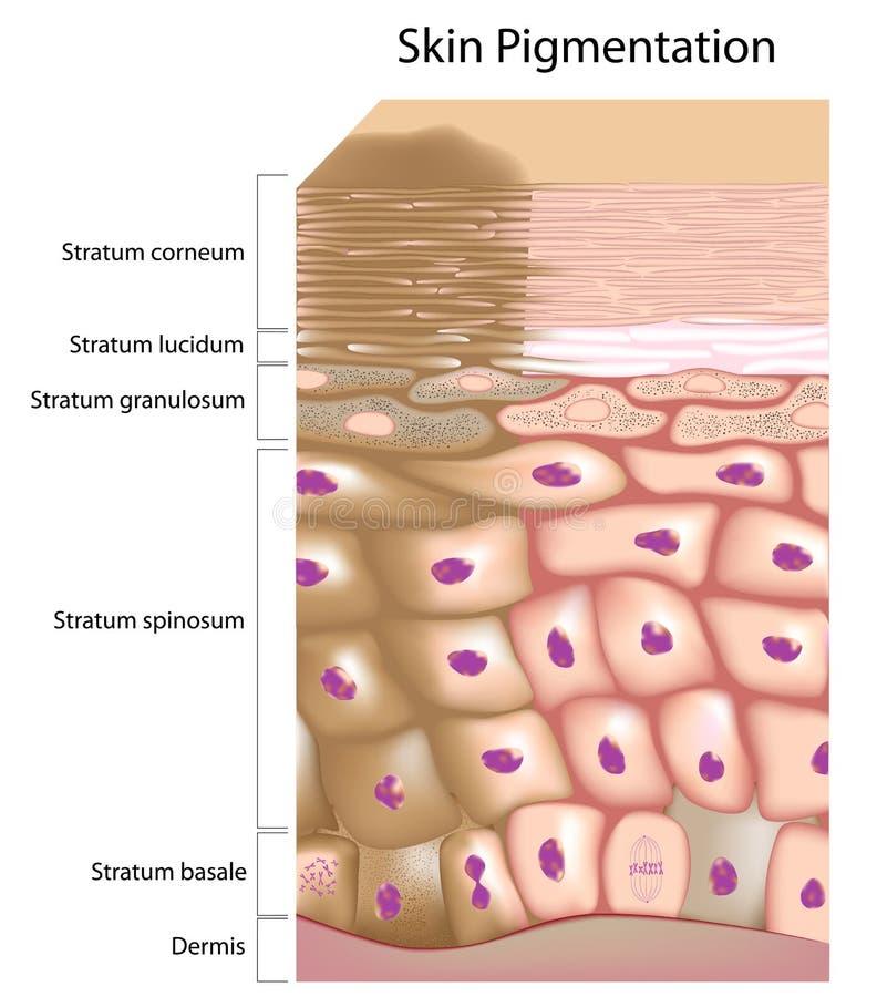 Formacja nierówny skóry brzmienie ilustracja wektor