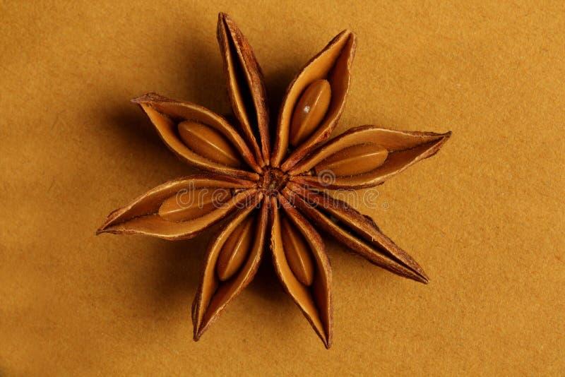 formad kryddastjärna för anise indier royaltyfri foto