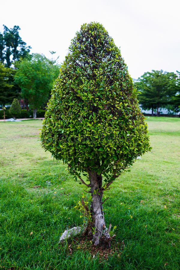 formad tree royaltyfri bild