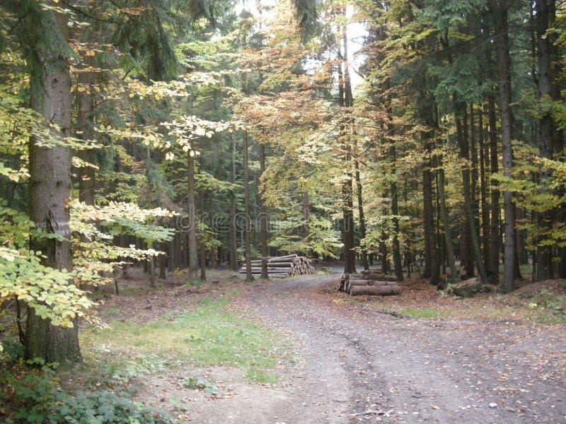 Formad väg för S kurva i blandad bred blad- och barrträdskog på hösten/nedgångdagsljus royaltyfria foton