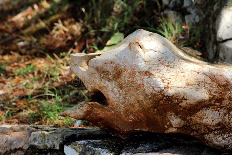 Formade konstiga vaggar bildande som liknar framsidan med den stora munnäsan och ögon som vilar i skugga av det stora trädet på d arkivfoto