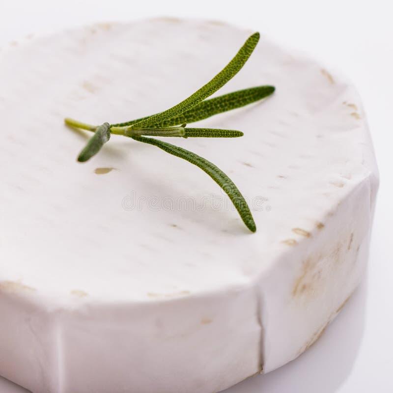 Formaggio cremoso delizioso del camembert su un fondo bianco fotografia stock libera da diritti